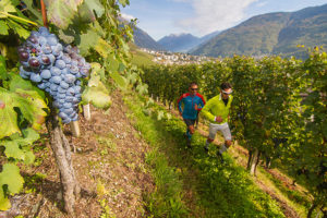 valtellina-wine-trail-2